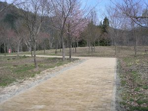 遊学の森 園路舗装